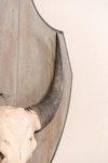 Accessories-1666